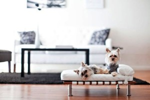 15 Stunning Pet Beds Ideas