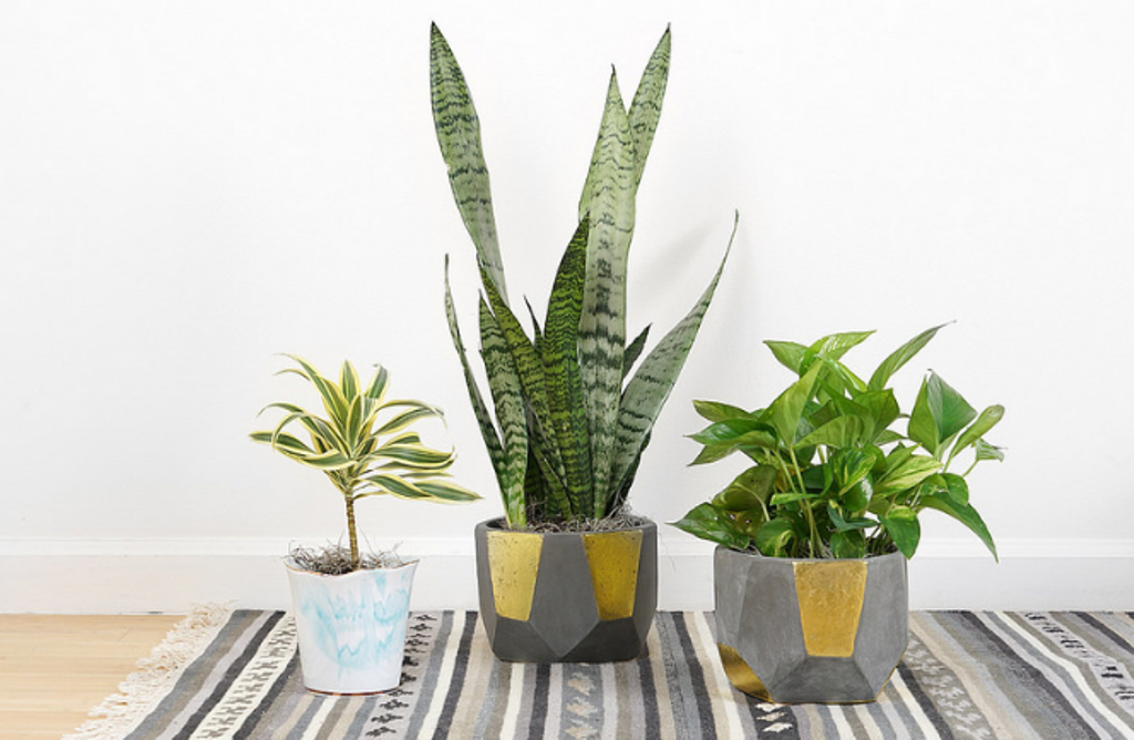 Go Green With Houseplants