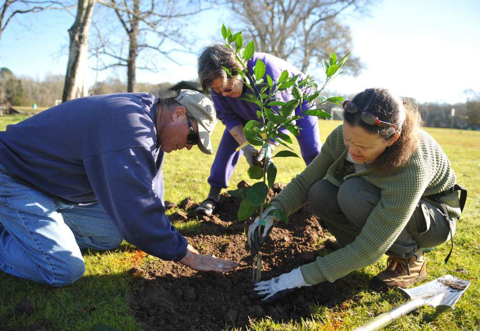 Obtain permission to plant new trees from your homeowner's association