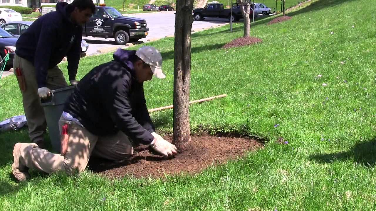 Take the time to properly plant your tree and care for it