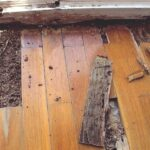 Termite Problem? Why You Need to Hire an Exterminator