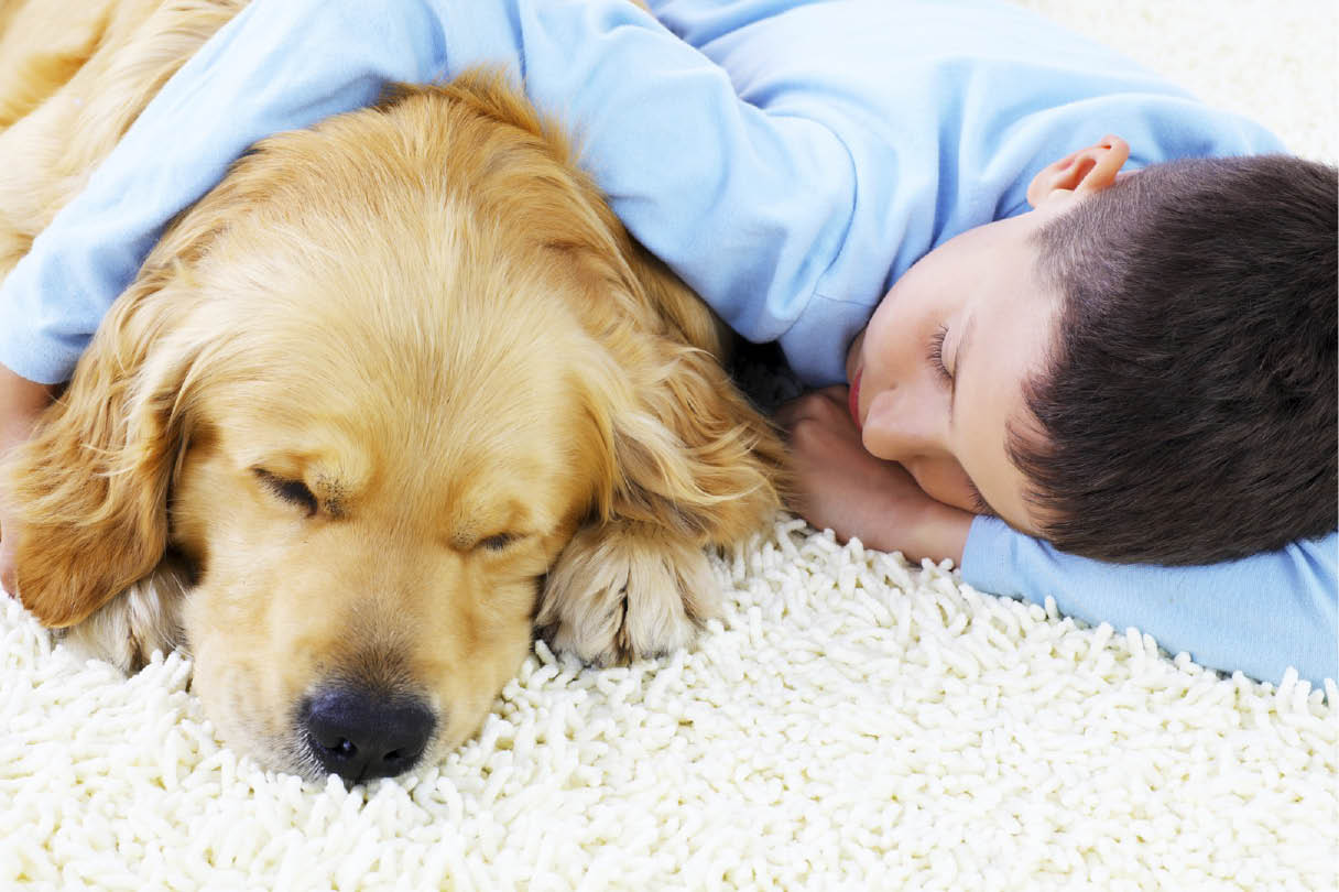 Causes of carpet odor