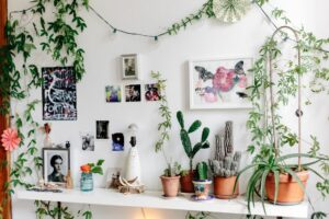 5 Must-Have Products for Your Indoor Garden