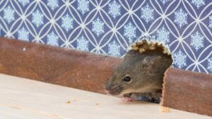 10 Best ways to Prevent Pest at Home