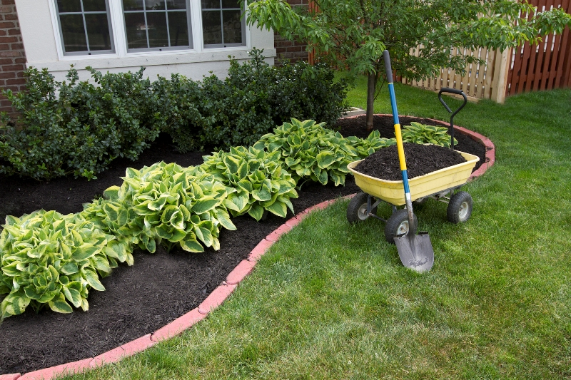 Low Maintenance Landscape Plants