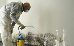 Useful Information on Mold Removal and What You Need to Consider