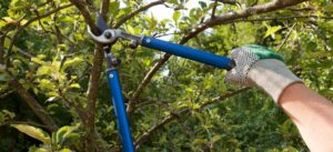 Tips and Techniques for Tree Pruning the Right Way
