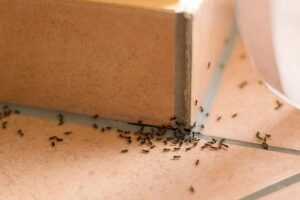 7 Ways to Completely Eliminate Termites and Pests in Your Home