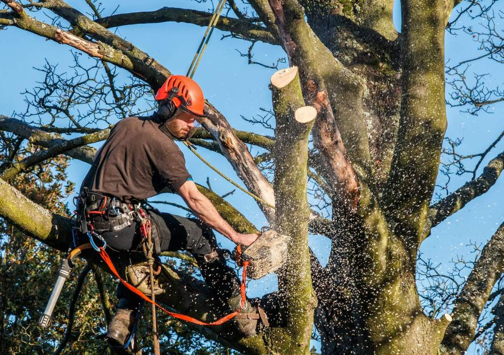 Maintaining a young and valuable tree's health