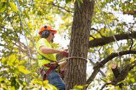 5 Reasons You Should Get Regular Tree Services for Your Backyard