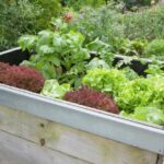 DIY Ideas for an Organic Garden